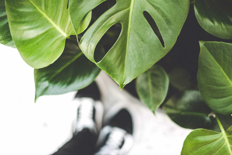 Hero image do sekcji nasze rośliny