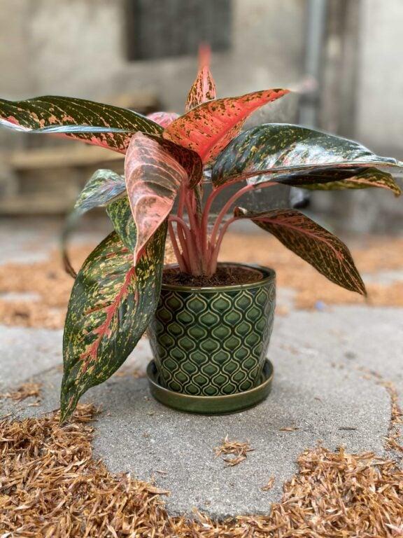 Zdjęcie Doniczka Reptile 13x12 cm w kategorii doniczki, ujęcie 1