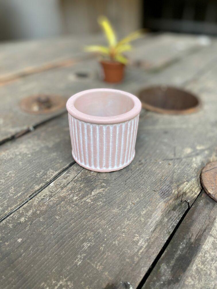 Zdjęcie Indian Pink 6x6 cm w kategorii doniczki, ujęcie 1