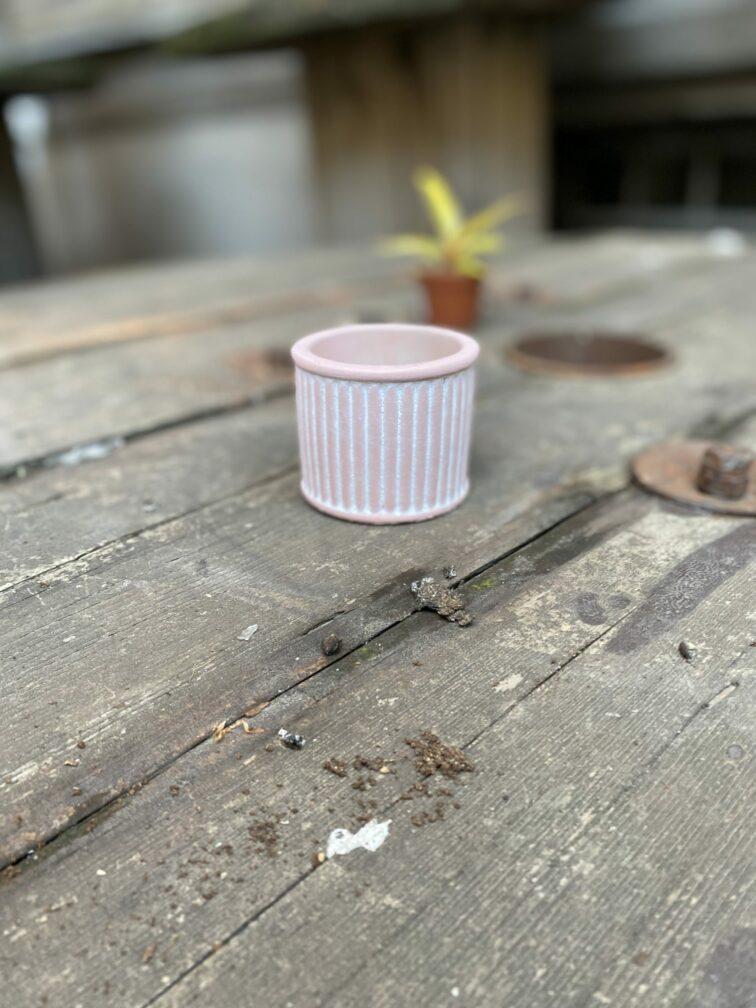 Zdjęcie Indian Pink 6x6 cm w kategorii doniczki, ujęcie 3