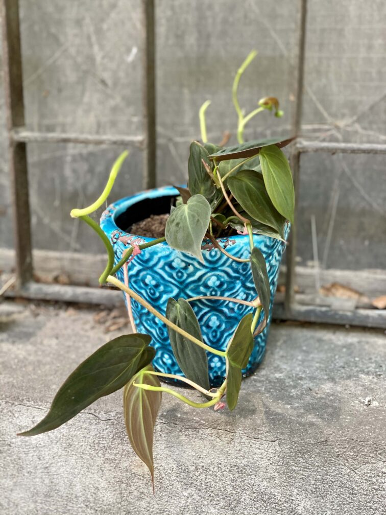 Zdjęcie Osłonka Modra 12x13 cm w kategorii doniczki, ujęcie 2