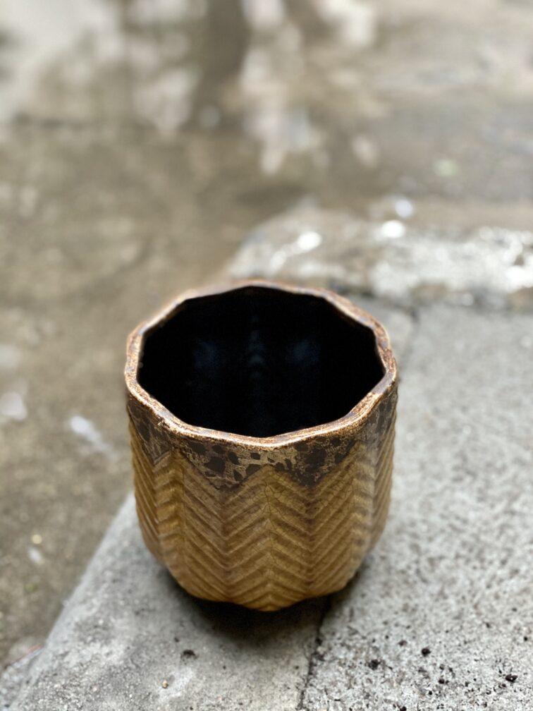 Zdjęcie doniczki lub oslonki: Jodła 11x12 cm, ujęcie 3