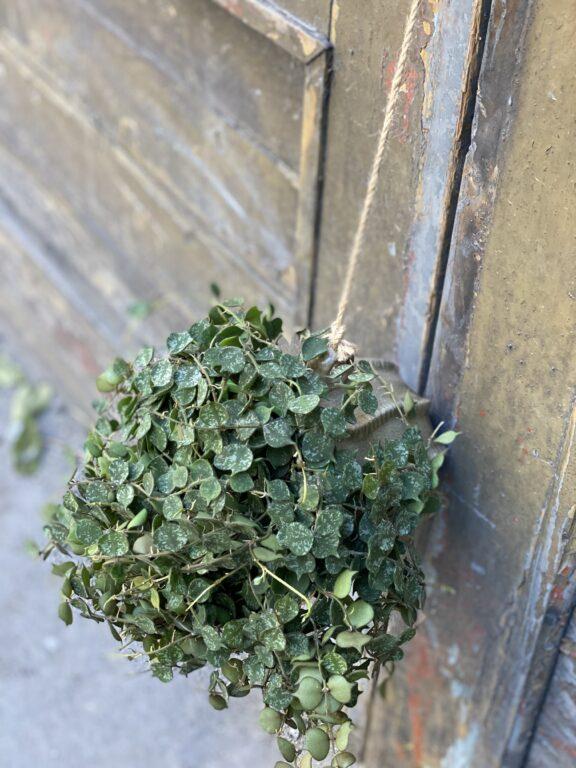 Zdjęcie doniczki lub oslonki: Amfora 12x15 cm, ujęcie 2