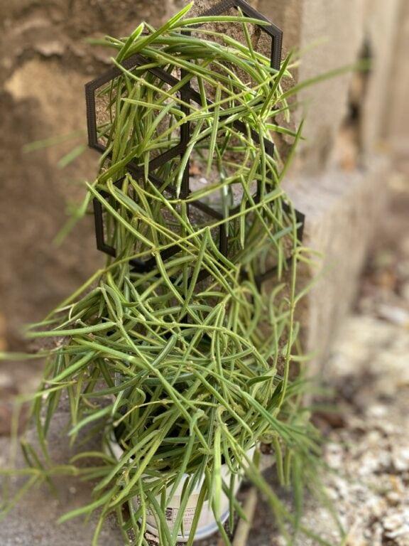 Zdjęcie akcesoria Stelaż do roślin Heksagon, ujęcie 2