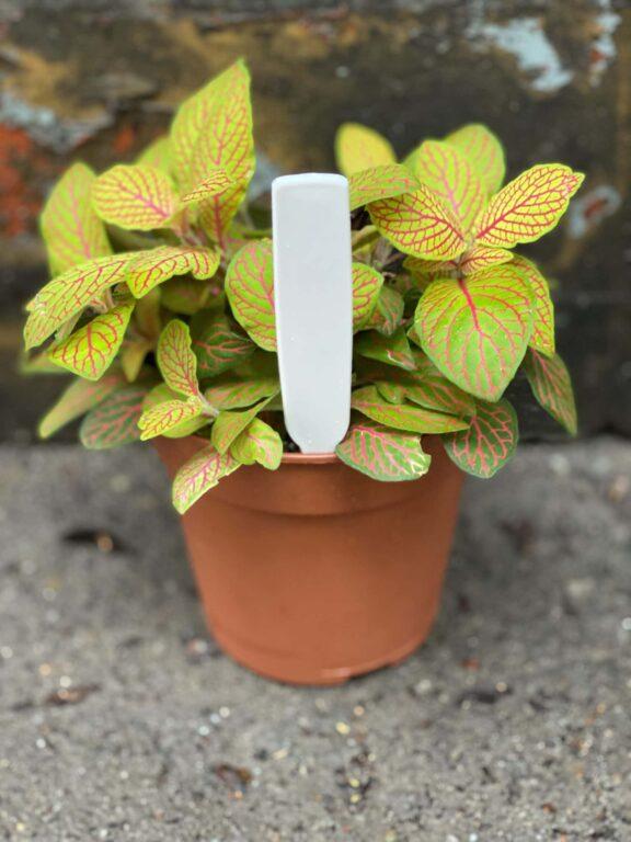 Zdjęcie akcesoria Etykietka do nazw roślin, ujęcie 1