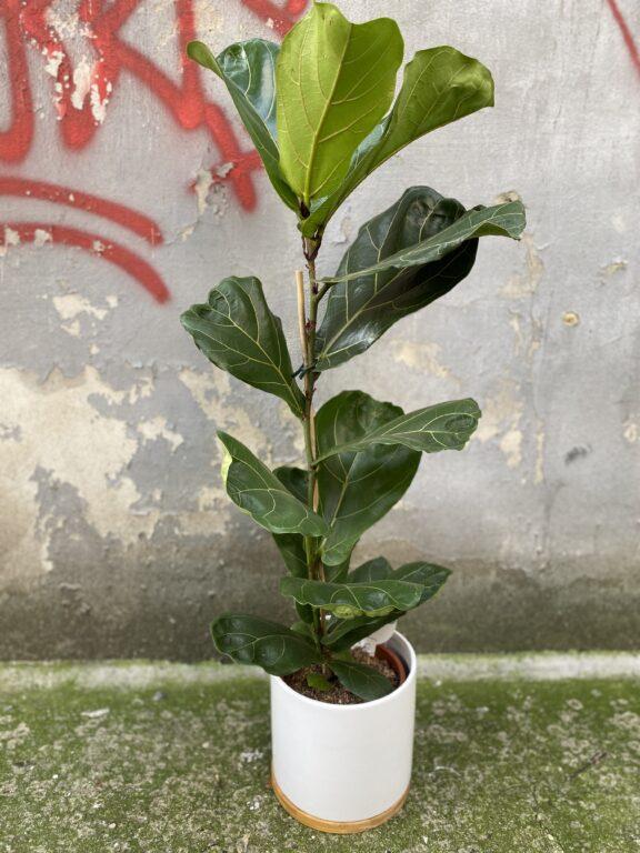 Zdjęcie doniczki lub oslonki: Osłonka Bamboo 17x19 cm, ujęcie 2