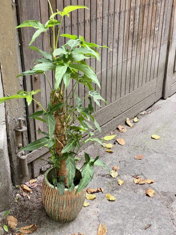 Zdjęcie doniczki lub oslonki: Osłonka Cinder Green 16x22 cm, ujęcie 2