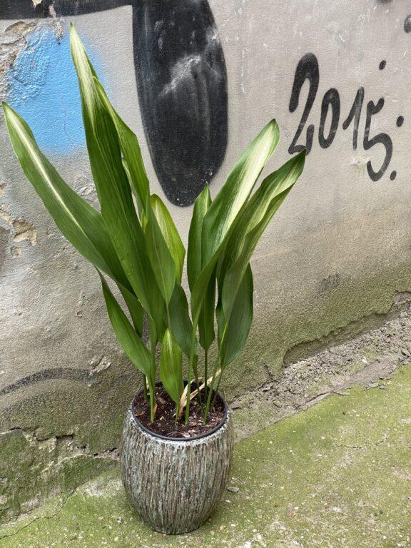 Zdjęcie doniczki lub oslonki: Osłonka Cinder Grey 16x22 cm, ujęcie 2