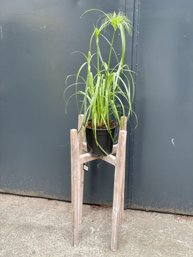 Zdjęcie doniczki lub oslonki: Kwietnik drewniany 0x70cm, ujęcie 3