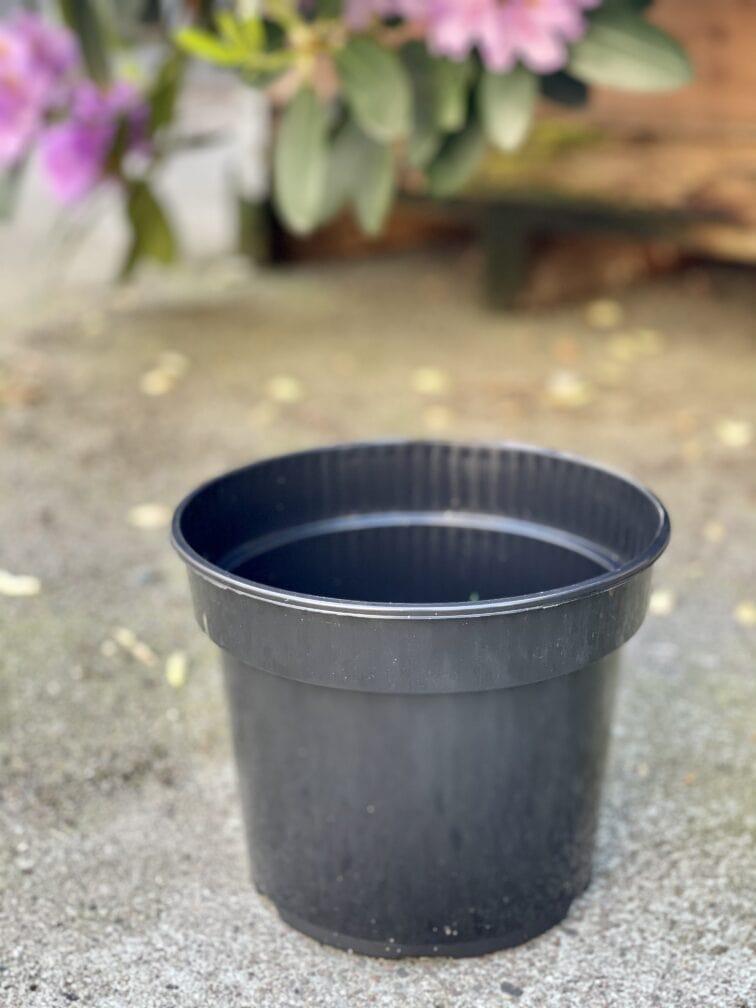 Zdjęcie doniczki lub oslonki: Doniczka plastikowa 19x15cm, ujęcie 1