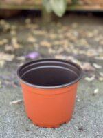 Zdjęcie doniczki lub oslonki: Doniczka plastikowa 14x11cm, ujęcie 1
